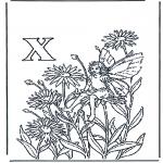 Diverse - Alphabet X