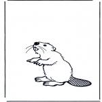 Dyre-malesider - Beaver
