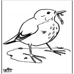 Dyre-malesider - Blackbird