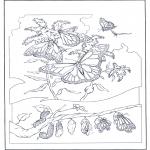 Dyre-malesider - Butterflies 2