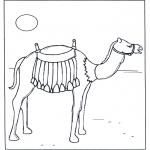 Dyre-malesider - Camel in the sunshine