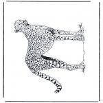 Dyre-malesider - Cheetah 2