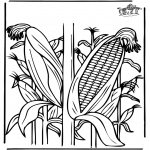 Diverse - Corn