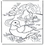 Dyre-malesider - Ducks