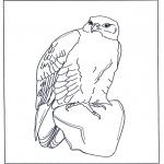 Dyre-malesider - Falcon