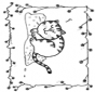 Free coloring pages cat