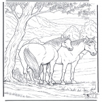 Dyre-malesider - Free coloring pages horse