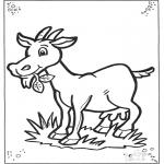 Dyre-malesider - Goat 2