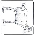 Dyre-malesider - Goat