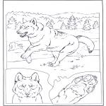 Dyre-malesider - Gray Wolf