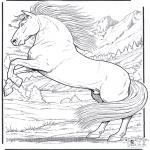 Dyre-malesider - Horse 5