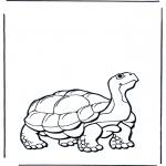 Dyre-malesider - Land turtle