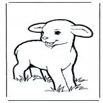 Dyre-malesider - Little lamb 1