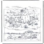 Dyre-malesider - Marmot