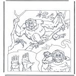Dyre-malesider - Orang utan