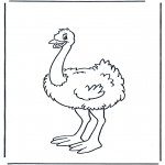 Dyre-malesider - Ostrich 1