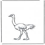 Dyre-malesider - Ostrich 2