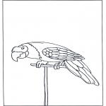Dyre-malesider - Parrot 3