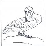 Dyre-malesider - Pelican