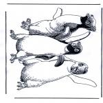 Dyre-malesider - Penguin 1