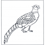 Dyre-malesider - Pheasant