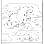 Dyre-malesider - Polar bear