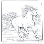 Dyre-malesider - Running horse