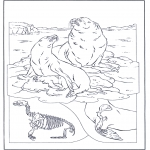 Dyre-malesider - Sea lions