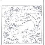 Dyre-malesider - Seals