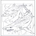 Dyre-malesider - Shark