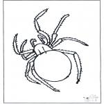 Dyre-malesider - Spider