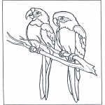 Dyre-malesider - Two parrots