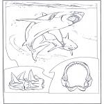 Dyre-malesider - White shark
